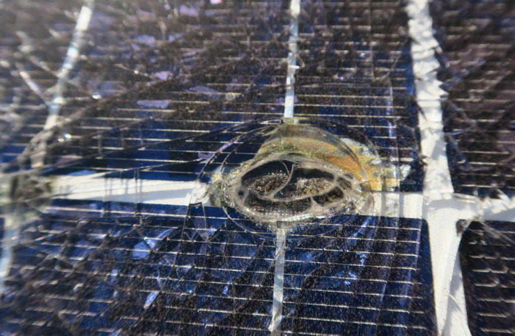 Eine glatte Oberfläche der zerstörten Frontglasscheibe und brauche Flecken im Bereich der Zellverbinder sind ein deutlicher Hinweis darauf, dass es sich nicht um einen Hagelschaden handelt.